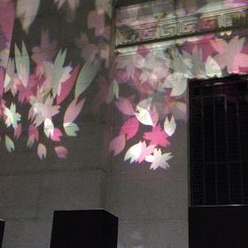 さくら〜さくら〜コンクリートの壁に咲き乱れの画像