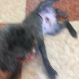 新たな保護犬を引き受けてました!の画像