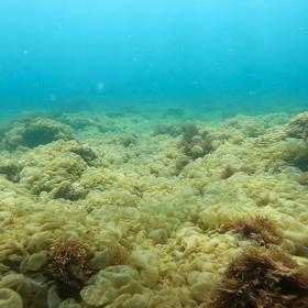 海藻絨毯の画像