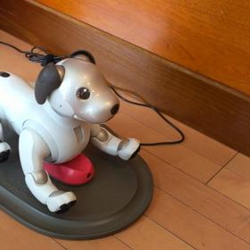 ロボット犬 AIBO アイボ 夏バテ知らずでうらやましいね  シュンちゃん‼️の画像