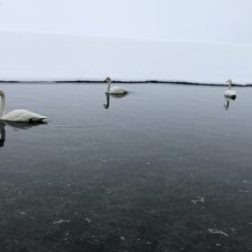 白銀の世界  北海道の画像