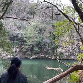 ヴォイスヒーリング風景動画の画像