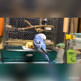 ぴーちゃんの動画の画像