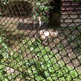 猟犬の訓練所への画像