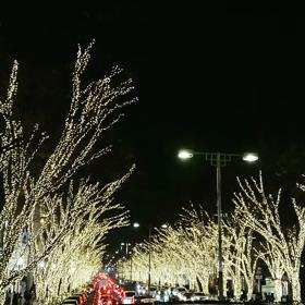 表参道イルミネーションの画像