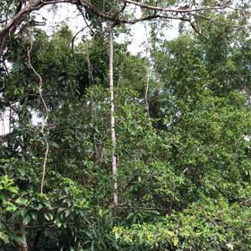 【2歳&3歳の子連れボルネオ島・コタキナバル旅行】3日目⑅◡̈*.。.:✩の画像