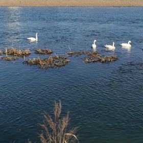 羽ばたく準備♡花嫁さんのお支度と白鳥の湖!?の画像