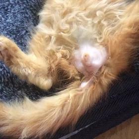 仔猫のもぃちゃん❤️ゴツゴツの身体ですが頑張っています❗️❗️の画像
