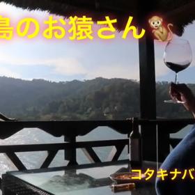 お猿さん☆の画像