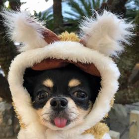 愛犬動画更新  銀座ママ 人生必勝法 ライバルに勝つ方法  美肌で人生大逆転 京都 紅葉の画像