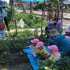 ジャガイモと枝豆収穫の画像