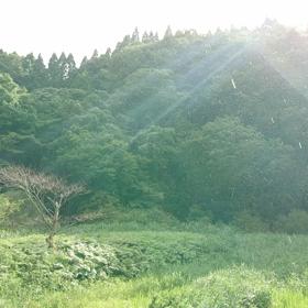 2019年「引っ越し最適化宣言」☆「MIRIA」私の「ロゴストロンL体験談☆」の画像