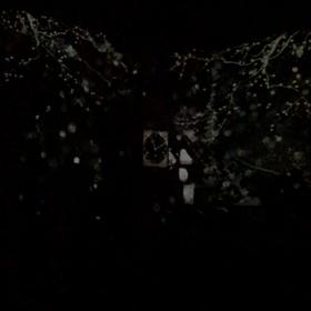 松島円通院のライトアップ♡の画像