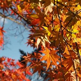 ご近所にも秋見つけた♡の画像