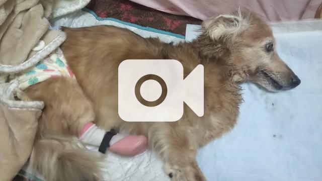 犬 腎 不全 末期 【獣医師監修】犬が腎不全になったら?症状と余命、食事、治療法